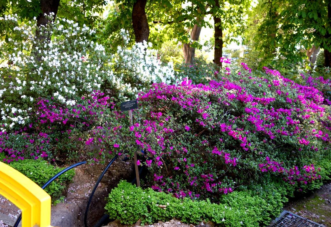 Сад В Мадриде