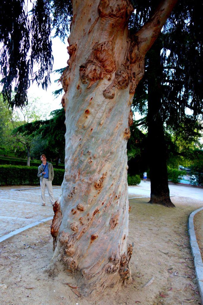Кора по спирали на дереве