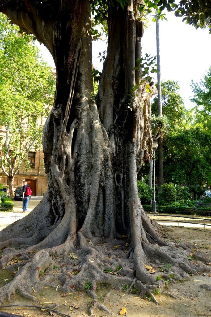 Странные деревья в Испании