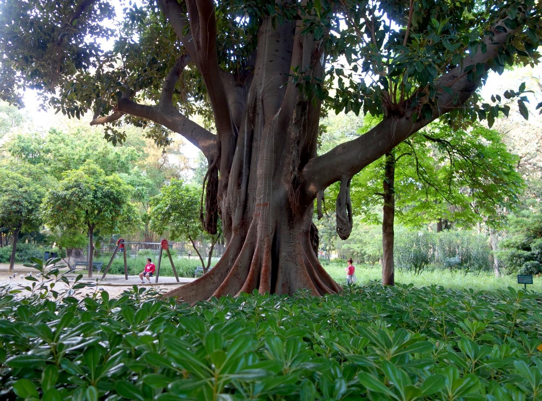 Гигантские деревья Испании