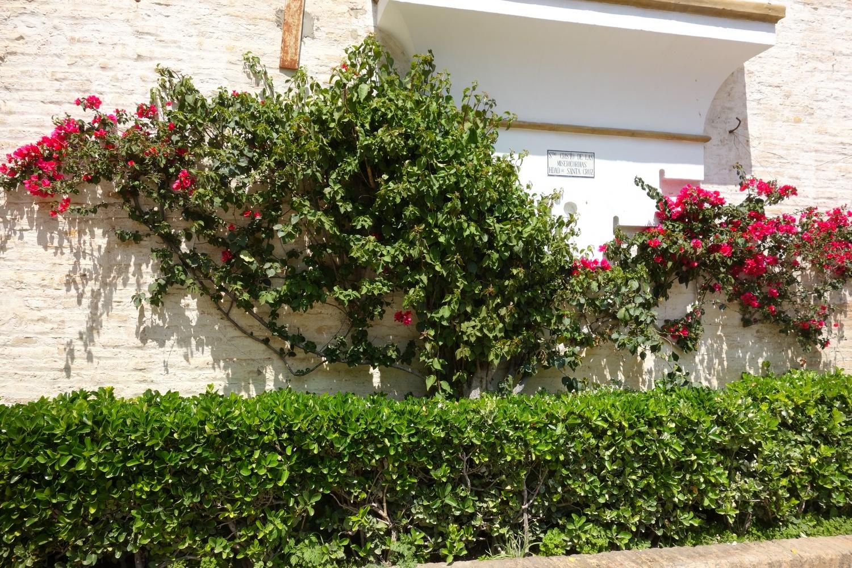 Плоские кусты на стене в Испании