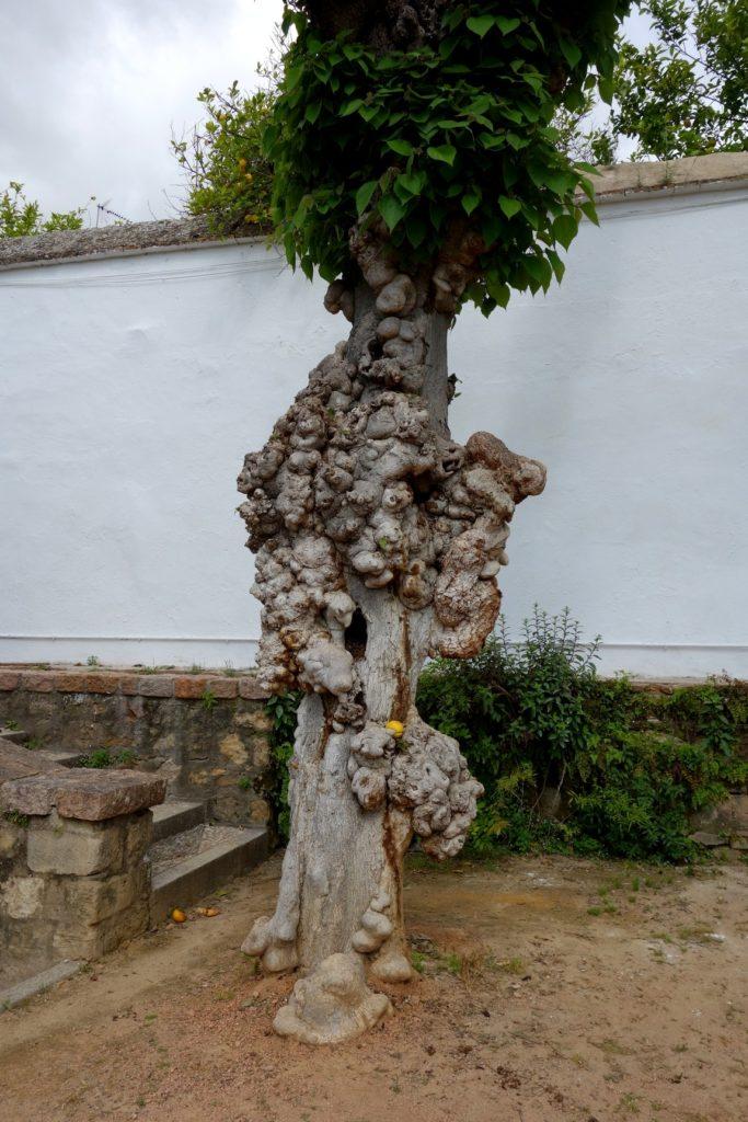 Уродливое дерево