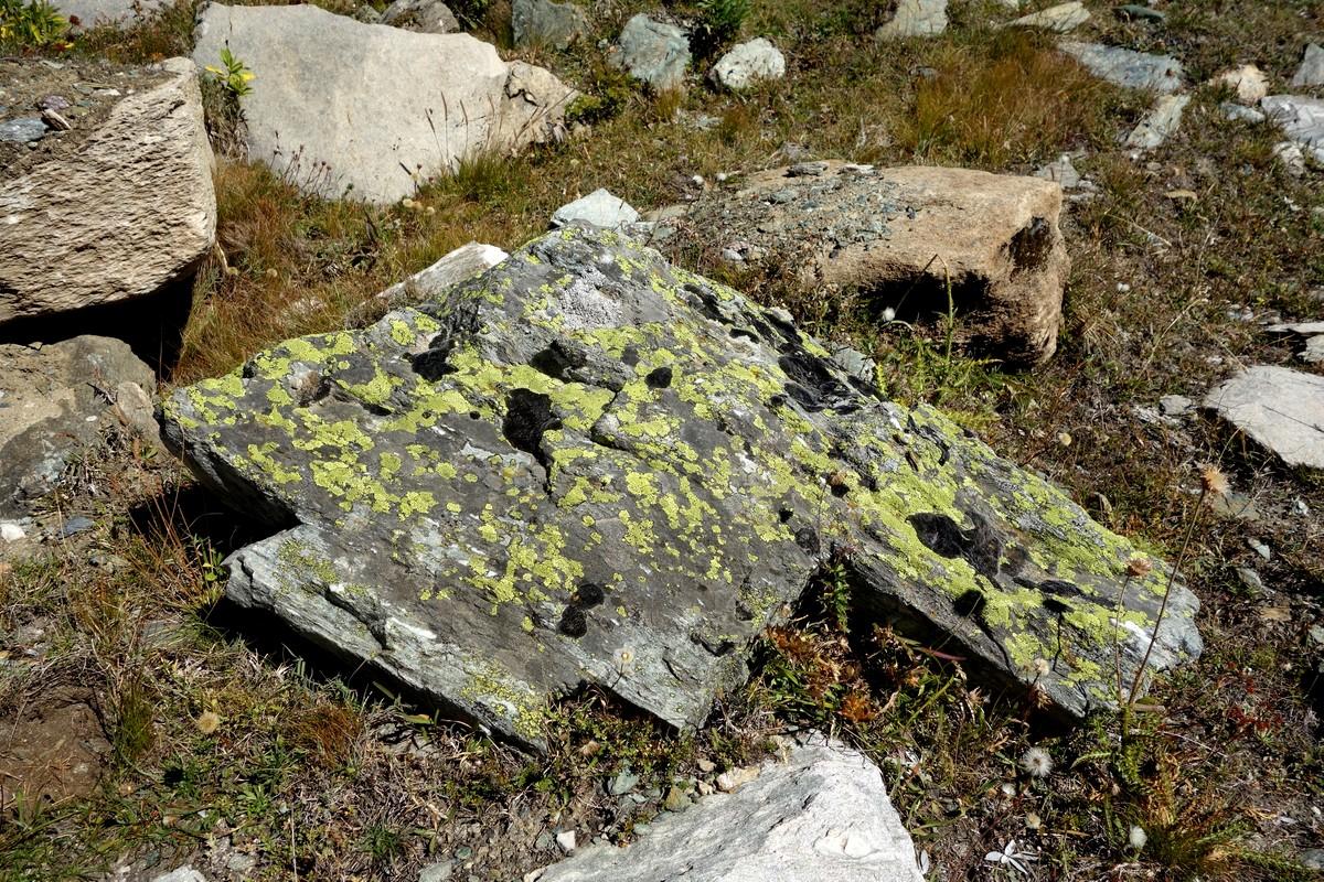 Лишайники на камнях в Швейцарии
