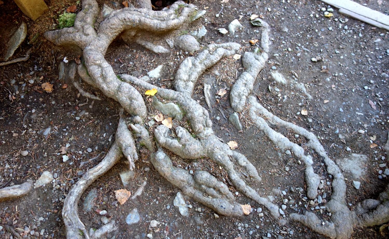 Странные корни деревьев