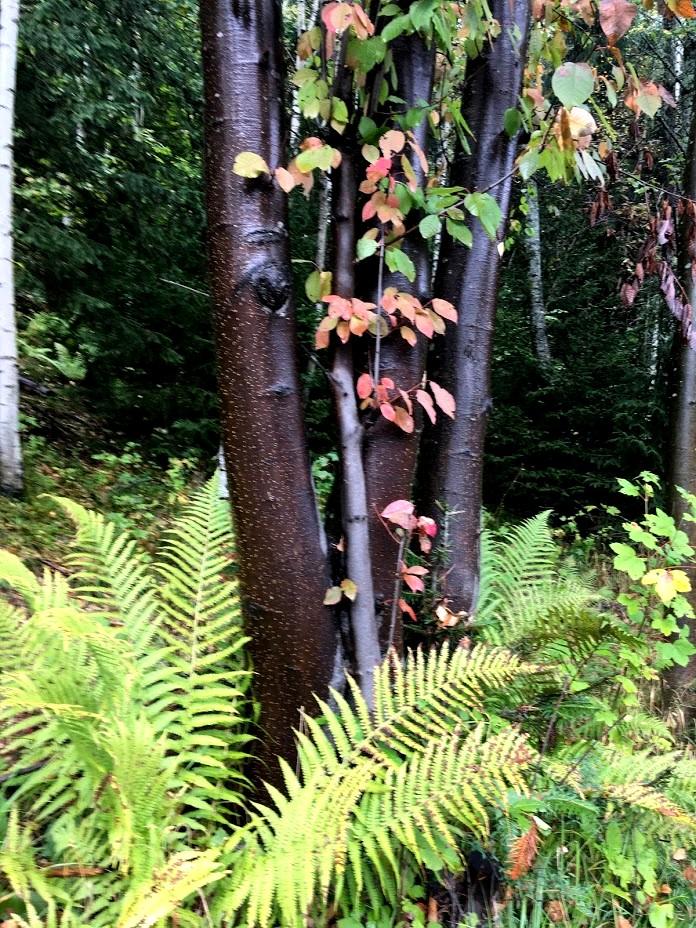 Красота леса во Франции