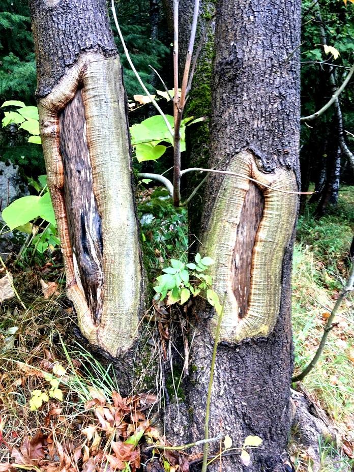 Странные деревья