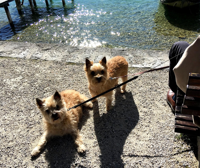 Забавные собачки (Франция)