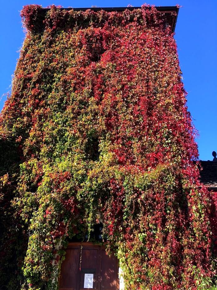 Зелень до самой крыши часовни во Франции