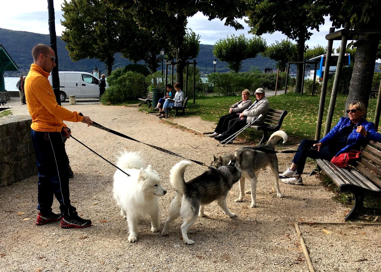 Собачки на берегу озера Анси во Франции